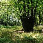 forestrythumb.jpg