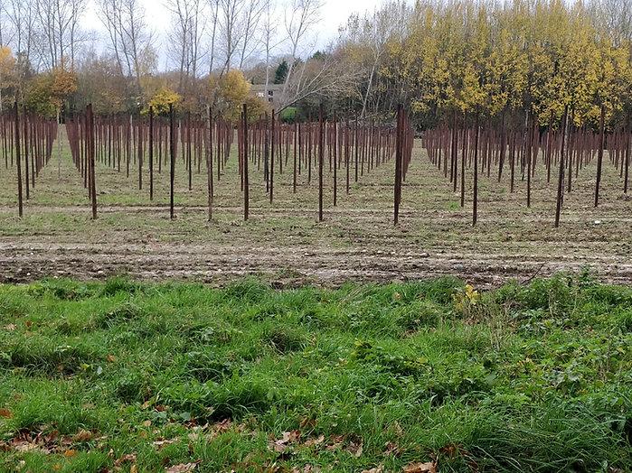 orchards10.jpg