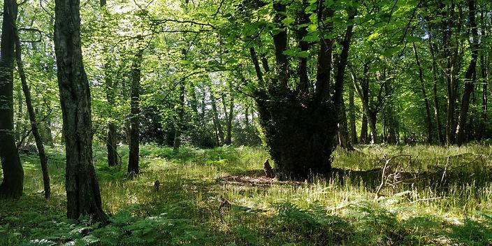 forestry5.jpg