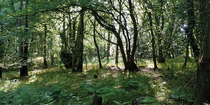 forestry6.jpg