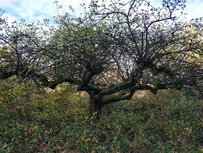 orchards11.jpg