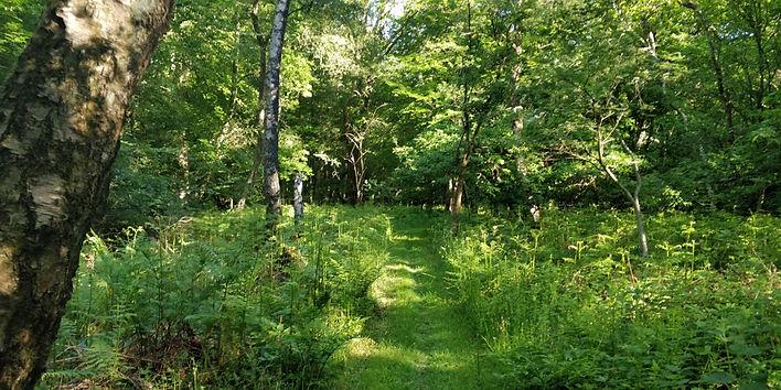 forestry7.jpg
