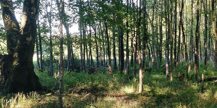 forestry8.jpg
