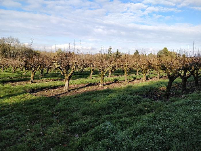 orchards9.jpg