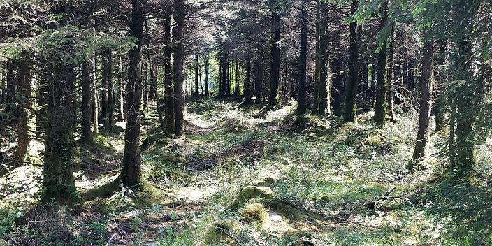 forestry10.jpg
