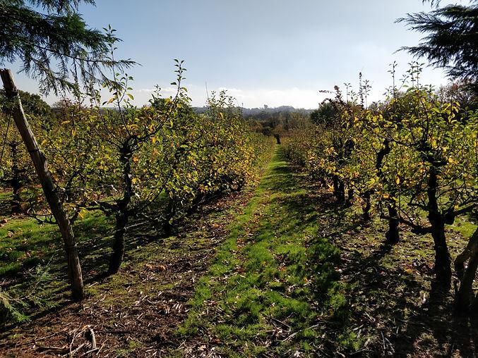 orchards12.jpg