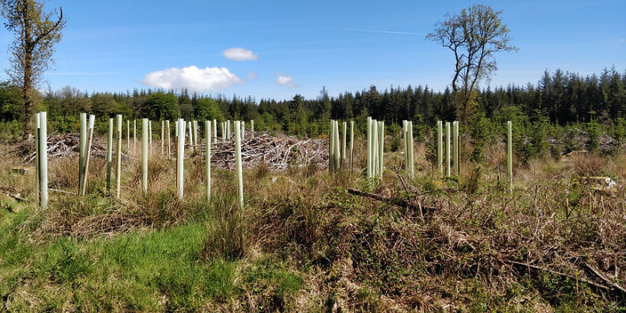 forestry11.jpg