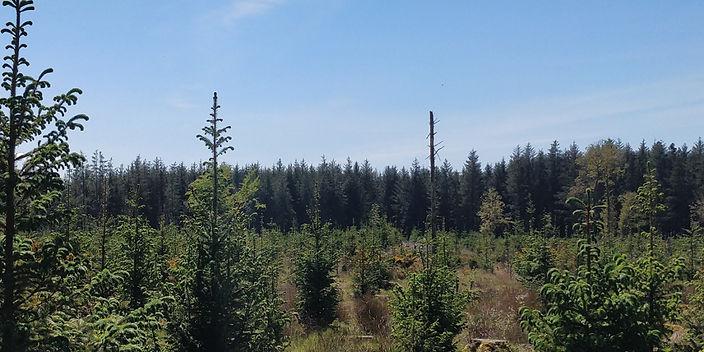 forestry9.jpg