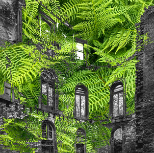 Deserted building with ivy