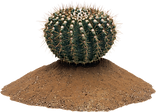 cactus_PNG23638.png