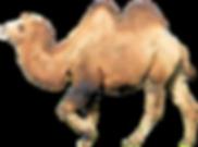 camel-1987672_1920.png
