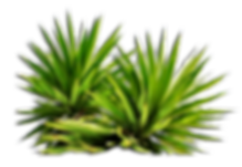 bush_PNG7212.png