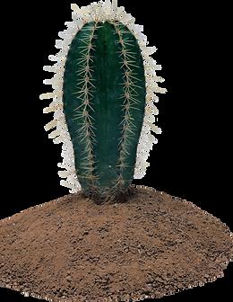 cactus_PNG23639.png