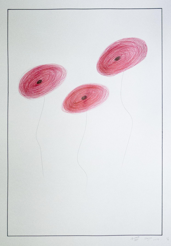 3 красных мака