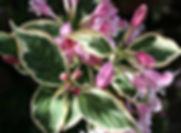 Te Atatu Web page photo 2.jpg