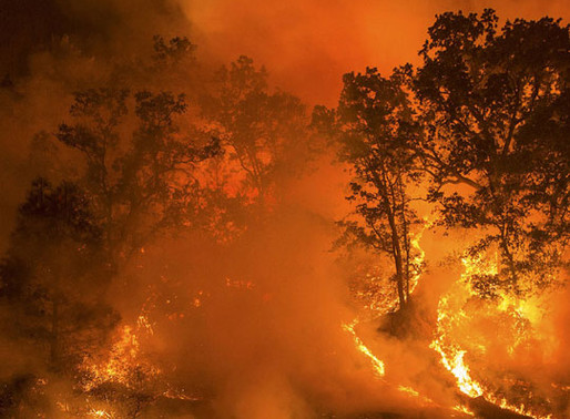 West Coast Wildfires Continue Alongside Pandemic