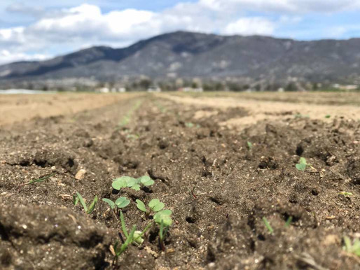 Organic Soil Conditioning - What are the benefits?