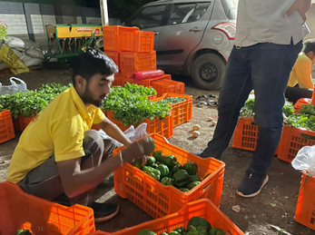 GreenSat's Team at vegetable collection