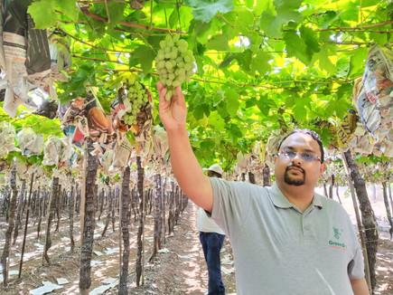 Grape farm visit