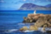 Milo-Cove-Oahu-1.jpg