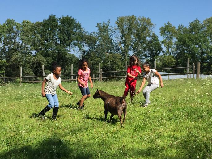 Kids goats.jpg