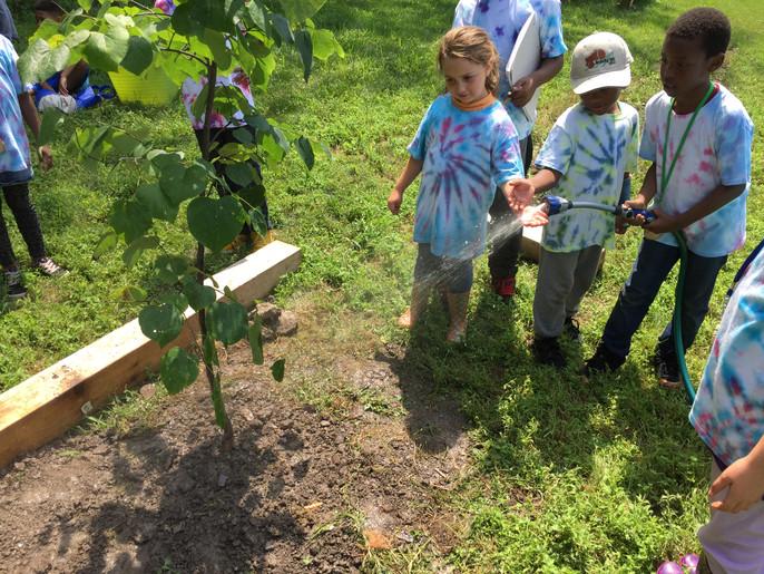 kids watering tree.jpg