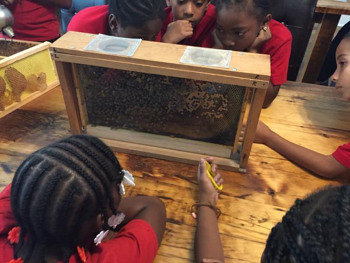 Kids bees.jpg