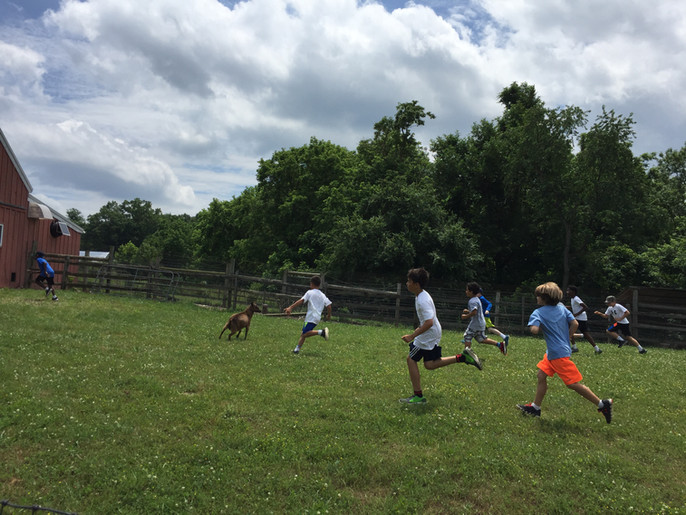 kids running with goats make brighter.jp