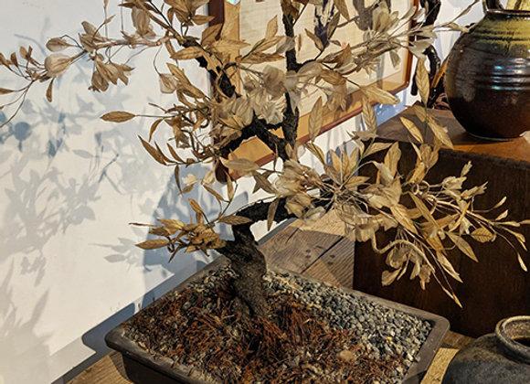Winter Leaf Bonsai