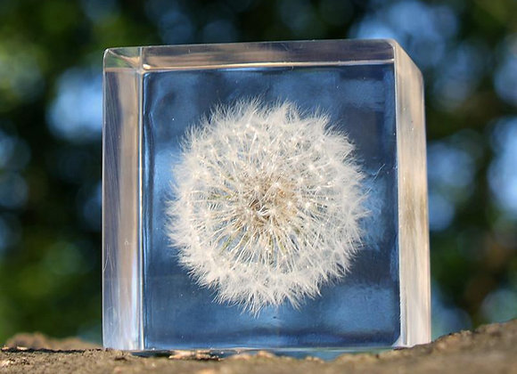 Dandelion Encased in Acrylic