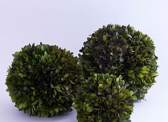Natural Preserved Boxwood Spheres