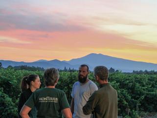 Rhône 2018 - Biodynamic sunrise