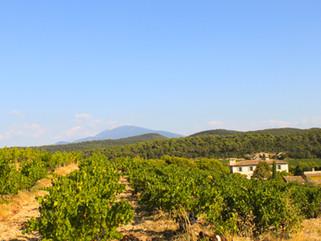 Rhône 2018 - A wine lover h(e)aven