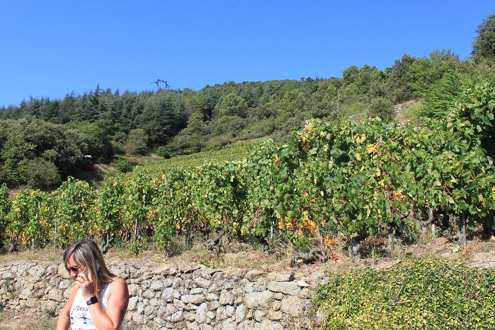 Sandrine is in the vineyard to ensure only what's needed is harvested
