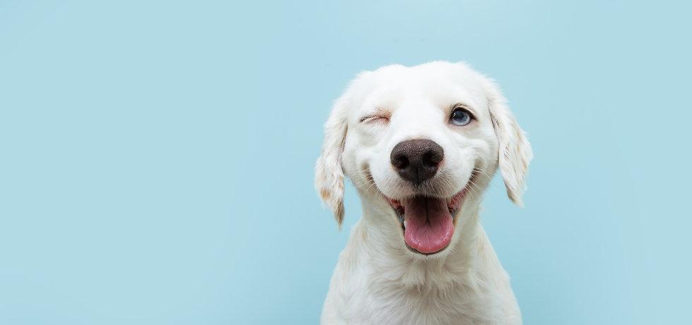 Cão SPA.jpg
