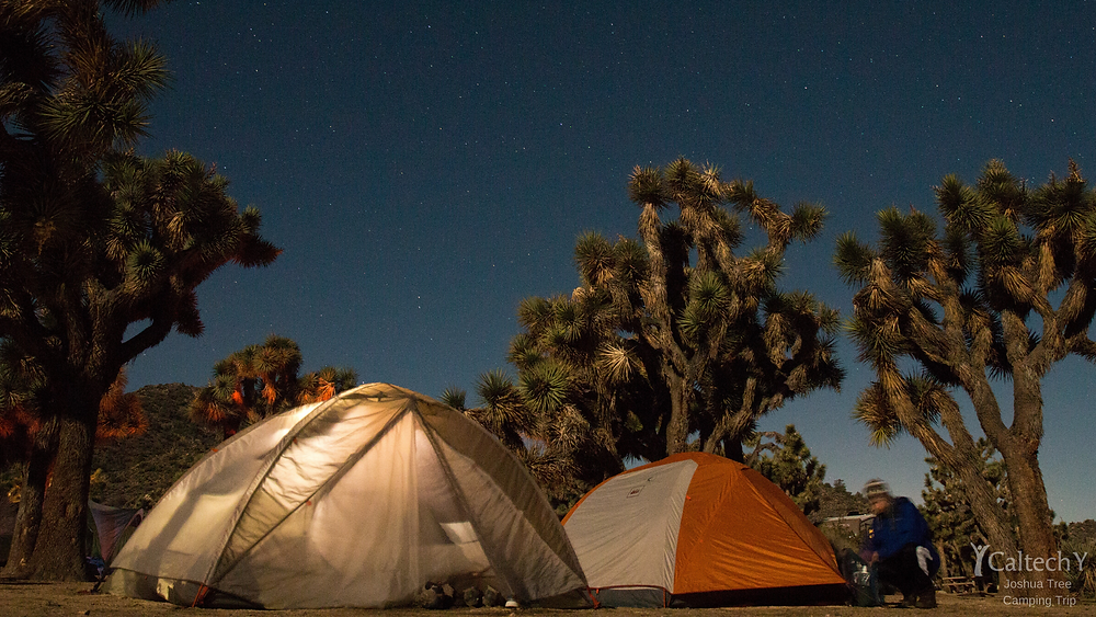 Joshua Tree Camping Trip Background