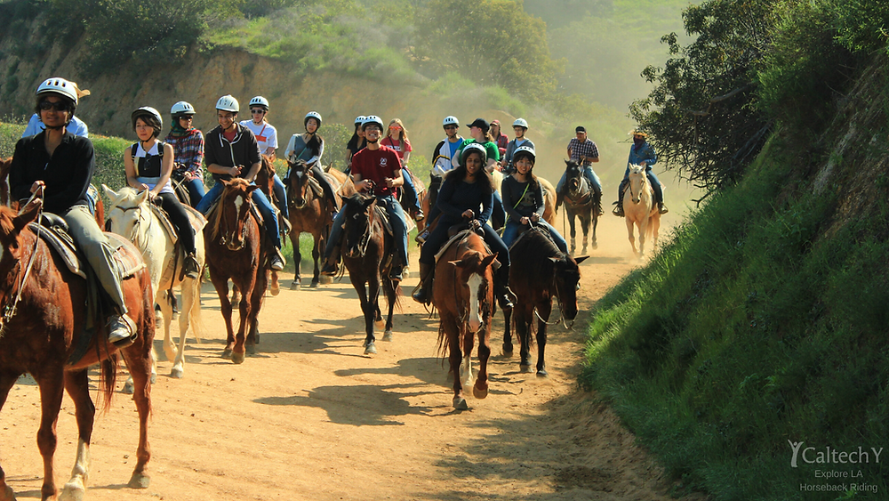 Explore LA Horseback Riding Background .