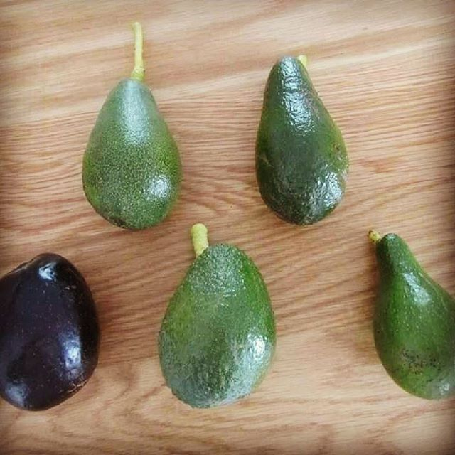 A selection of delicious our avocados! Clockwise from top left_ Bacon, Lamb Hass, Fuerte, Hass, Mexi