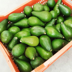 Shepard avocados - real beauties you rarely see in the shops and that don't change colour when ripe