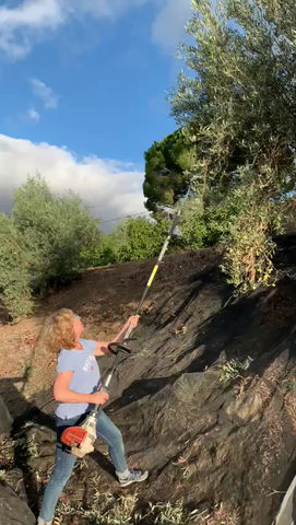Harvesting Olives 3 - The tools we use