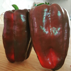 Monster mega delicious peppers ! What did you pick today fresh from the garden_ 🌶🌱👩🌾_