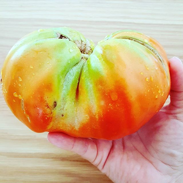 Giant tomato ! Magnificent, resplendent Mother Nature at her most impressive 🍅💚_