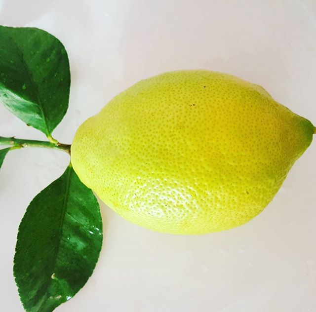 What's not to like _ 🍋💚_._