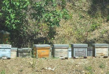 La Bonita beehives