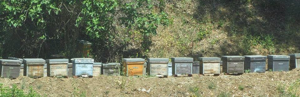 beehives at La Bonita