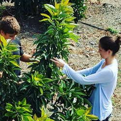 My brother and I during last years #avocado #harvest 🥑🌳💚🥑🌳 These #trees were #planted 3 years a