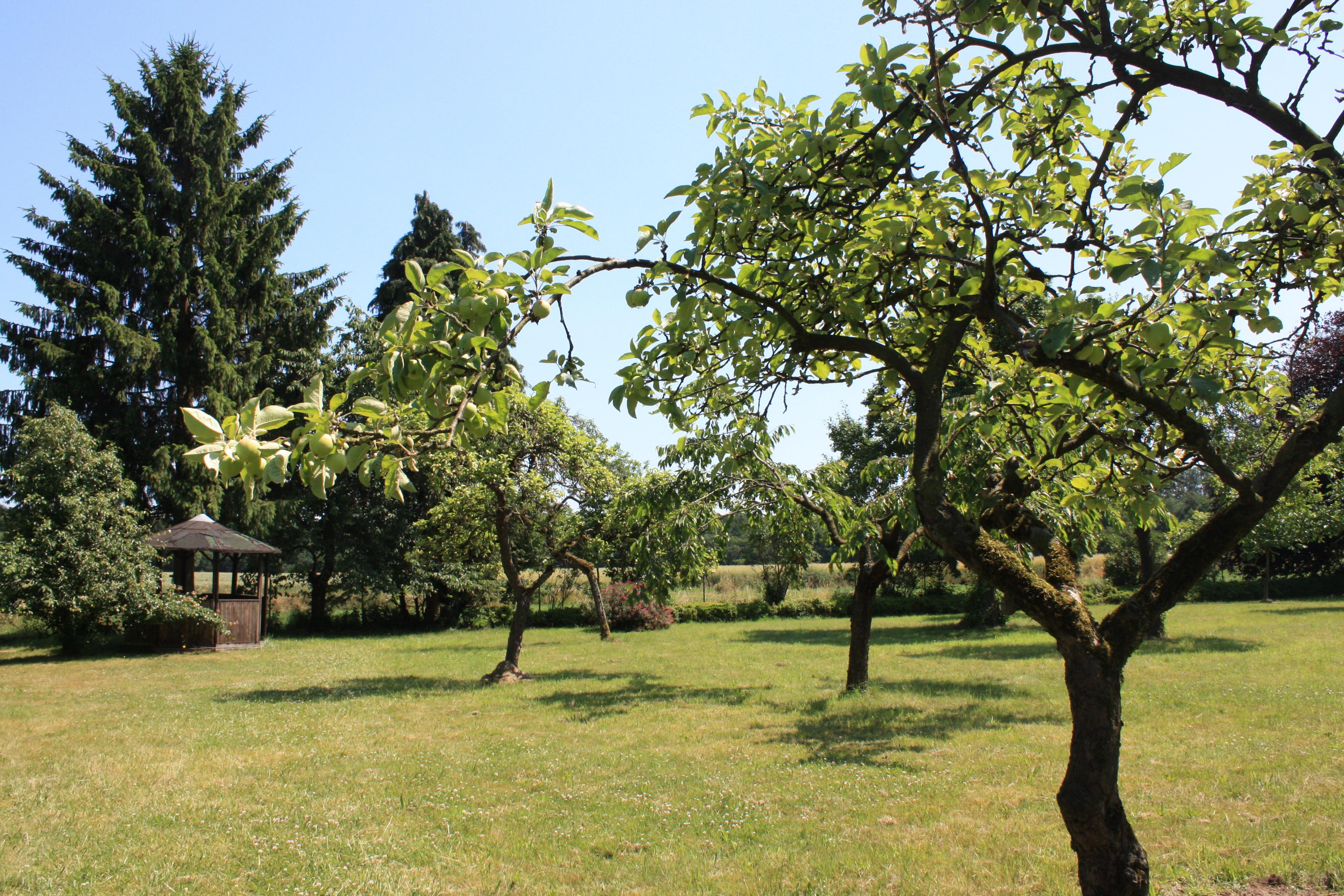 Apple orchard - World House Wetten