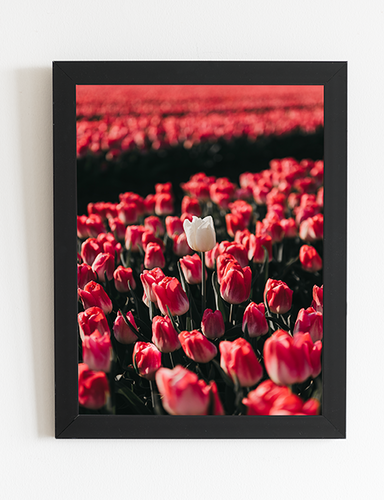 Amsterdam Wall Art Photography Canvas.pn