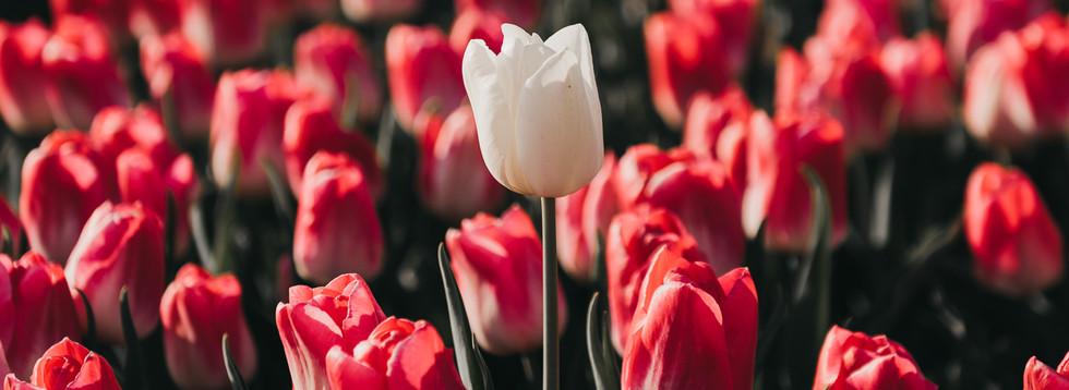 Photo 10 - White one