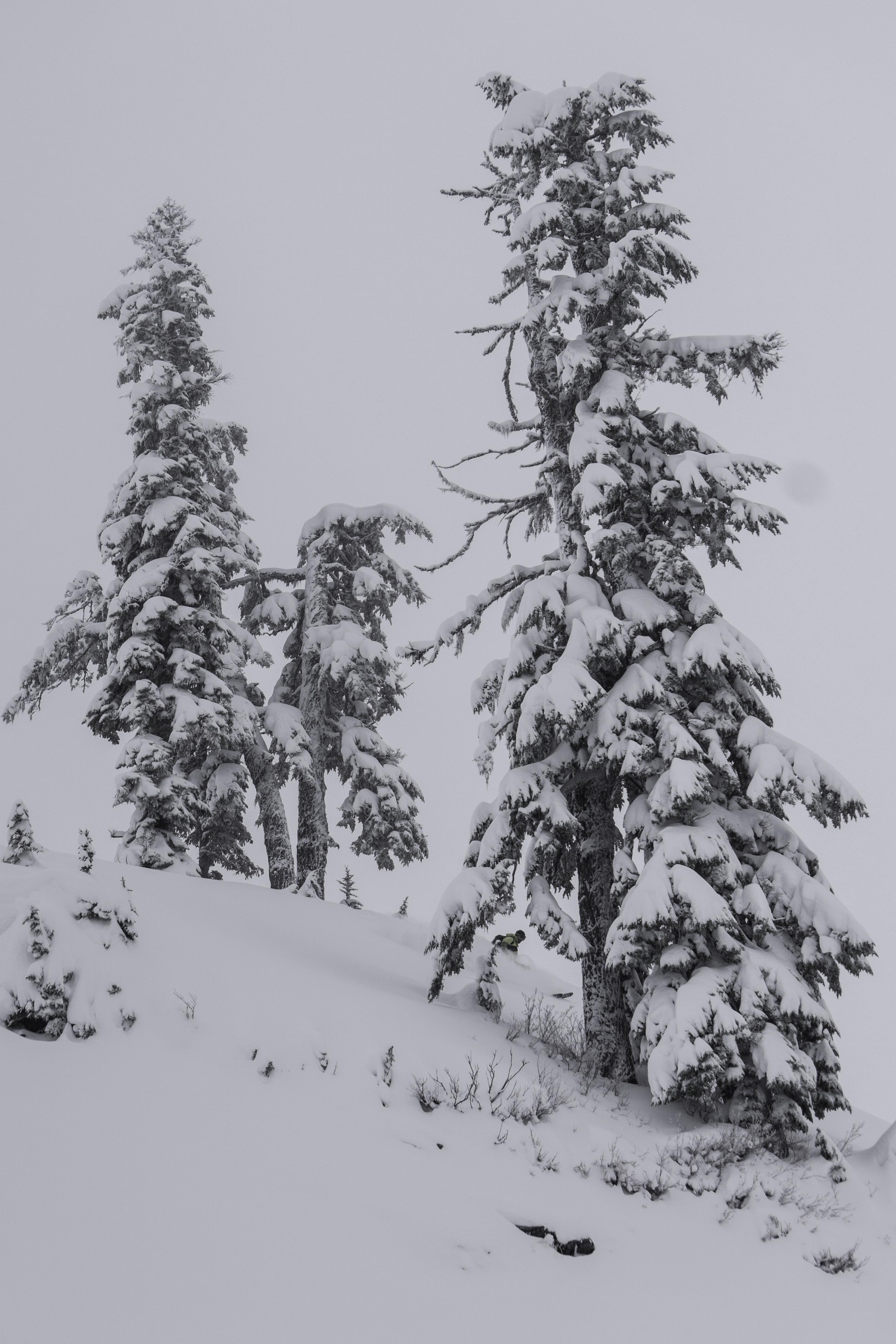 Baker find skier-03935